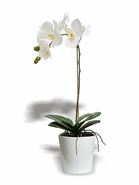 Beyaz Orkide (Tek Dal)